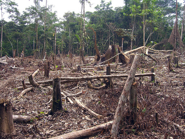 The Problem Caused By Rainforest Deforestation - Home